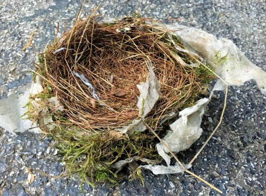 Used dryer sheet wound into a bird's nest. Photo by me