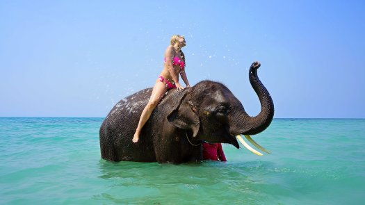 Photo of a woman riding an elephant in the ocean surf.