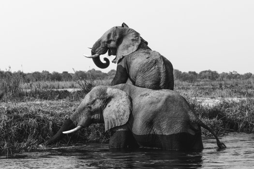 Photo of elephants. Photo by Florian van Duyn on Unsplash