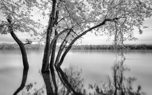 Black and white photograph of trees growing in a lake. Photo by Dave on Unsplash