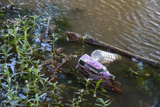 Plastic sports drink bottles stuck in the pond