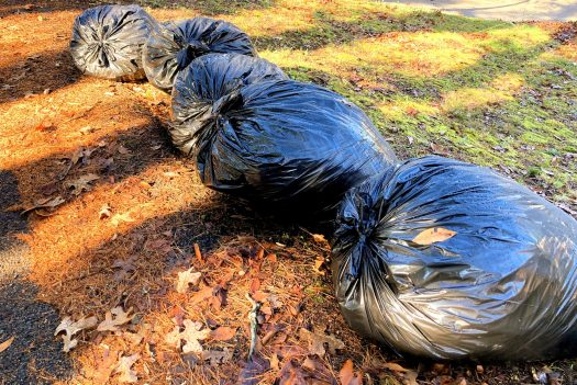Leaves bagged in large plastic garbage bags