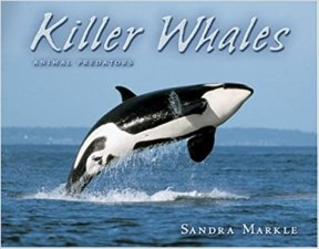 Killer Whales Animal Predators book cover