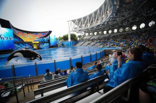 Orca performance at SeaWorld Orlando