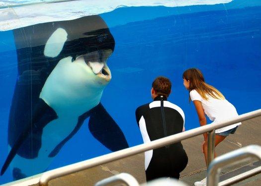 """Orkid"" at SeaWorld San Diego"