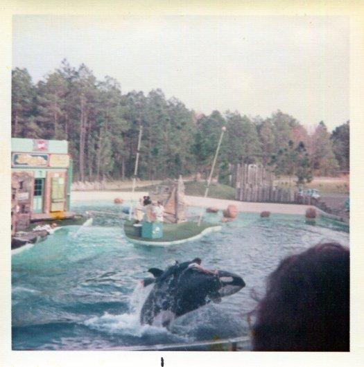 Trainer riding Ramu the orca at SeaWorld Orlando