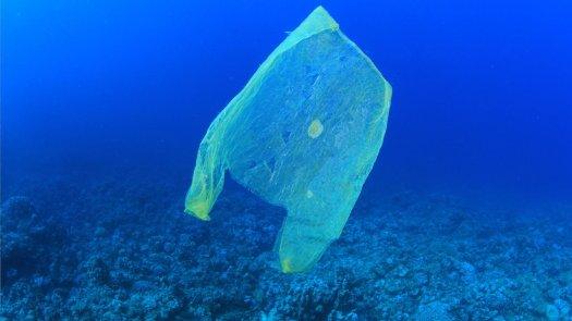 Plastic bag floating in ocean, looking similar to a jellyfish.