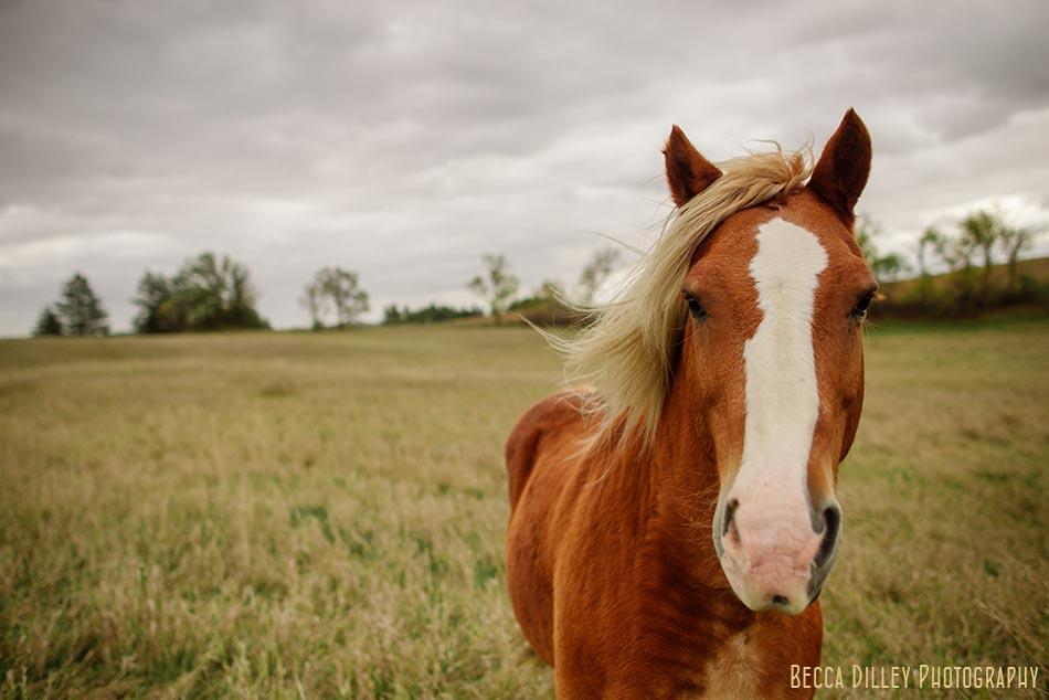minnsota farm photographer horse at paradox farm