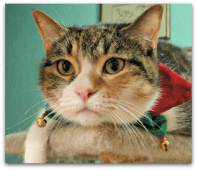 Michele's Weekly Pet - 4 - Goldie 4