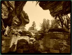 Tree Roots - Sedona, Arizona