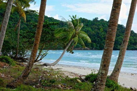 Älskade lilla palmbarn