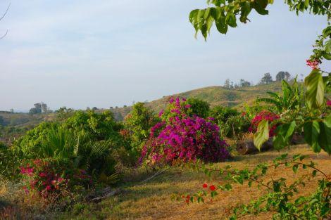 Grönt, grönt, grönt. På toppen av det lilla berget låg en liten anläggning med bungalows. Restaurangen var inte i drift, men vi fick se solen dala med en varsin läsk.
