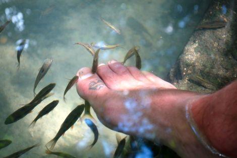 Som på spa, fast i skuggan under ett förtrollat träd. De små fiskarna snaskar hungrigt upp all död hud. Det kittlas som tusan och går sakta som fan, men att doppa fötterna är i alla fall svalkande i värmen.