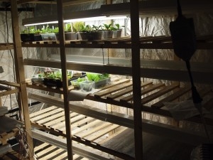 Seedlings started early in the season inside the warehouse. They'll go to the greenhouse next.