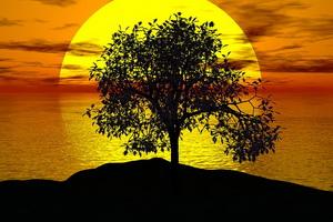 sommer, sonne, Baum, Sonnenuntergang