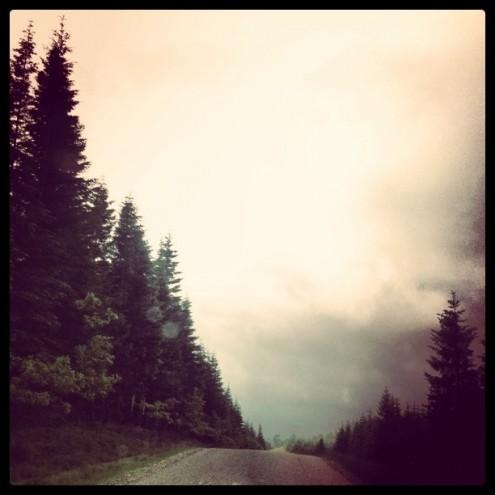 Vejen gennem skoven - via instagram
