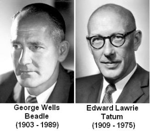 George Beadle and Edward Tatum won the 1958 Nobel Prize in __ for their genetic research.
