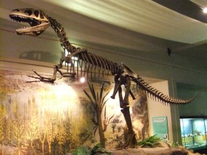 A skeleton of Megalosaurus, one of the first dinosaurs discovered, in the World Museum in Liverpool, UK.