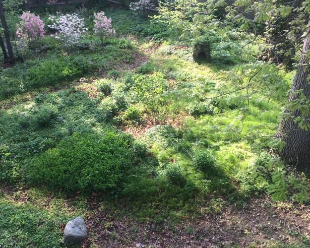 My backyard.