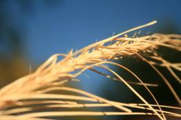 My macro photo of wild grass, the grass has been held for over 2 years.