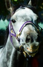 Is this horse grinning, or talking ?