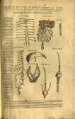 Figure 2: Unassembled flap anatomy, page 2, Vesalius De Fabrica, 1555