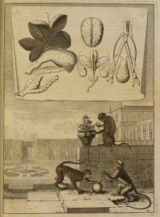 """Page 3 of Claude Perrault's """"Mémoires pour servir à l'histoire naturelle des animaux."""""""