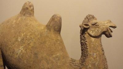 Rare Large Crouching Bactrian Camel (15)