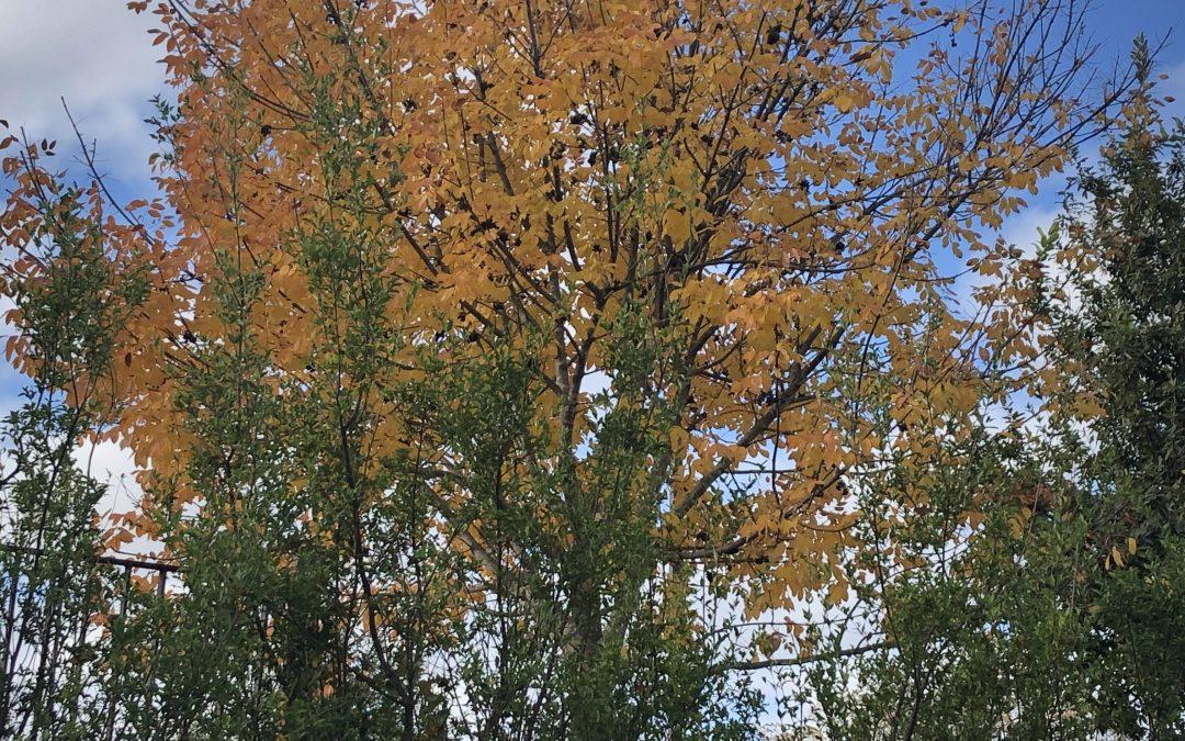 Leaves, Glorious Leaves