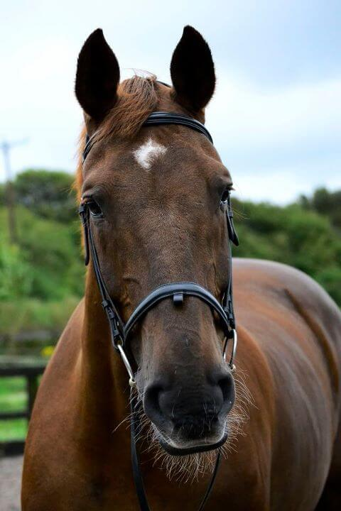Horse rider accident case study
