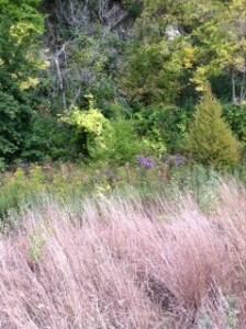 grasses,Vento