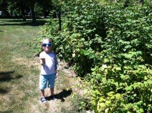 raspberry picker