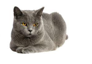 cat-blue-solid-jpg-500x0_q80_crop-smart_upscale-true