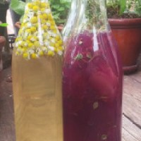 Fruit-Infused Honey Vinegars