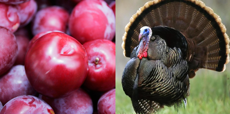 Plums and turkeys: a musical voyage around 2016