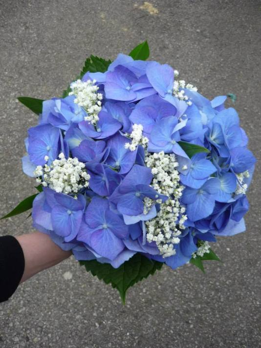 Bold blue hydrangea with fluffy gypsophilia for the bridesmaids