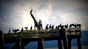 Sea birds on an old unused pier.