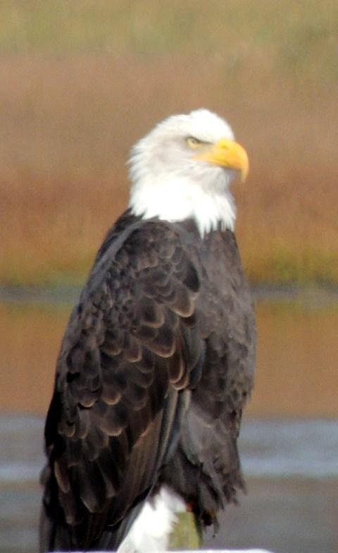 EagleSign05 10-5-2013 10-10-18 AM