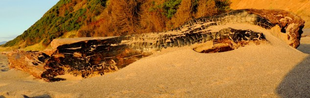 Burnt Driftwood 1110201402 - Copy - Copy