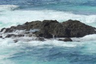 Tidal areas where sea life is seen frolicking....