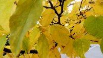 AutumnColors07