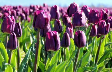 Lovely Purple: 1 Top 20% award for the day of 4/23/16; 2 Top 10% for week and month in April.