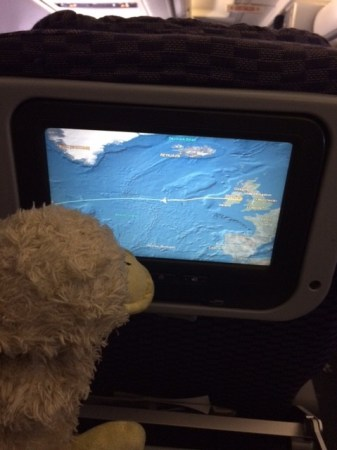 Duckie on a plane