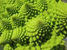 The beauty of the rhizome