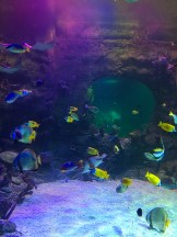 SEA LIFE Aquarium (7)