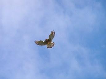 Feathers in flight