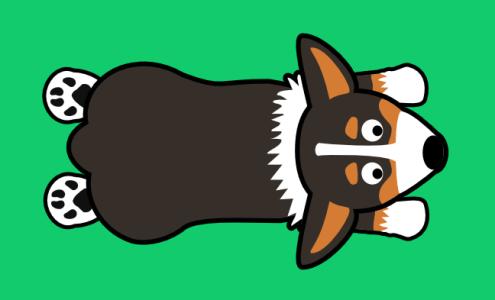 Tri-color Corgi