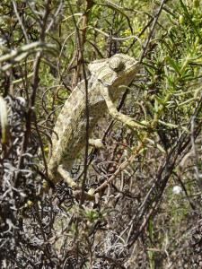 Image from Karma Chameleon in the Algarve