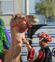 Camel with his King