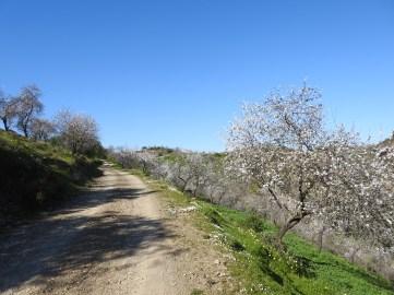 Rota das Amendoeiras